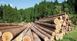 облік деревини
