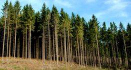національна інвентаризація лісів