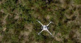 высадка лесов дронами