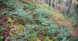 Молодий ліс