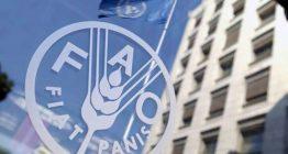 FAO ООН
