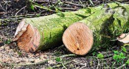 нелегальні рубки лісу