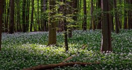 День працівника лісу